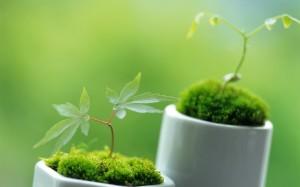 Plante.verte.pour.la.maison